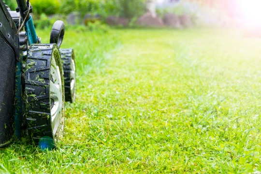 Case Study: Lawn Doctor Lookalike Audiences